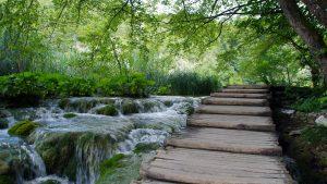 Tablones de madera cubren la mayoría de los senderos del Parque.